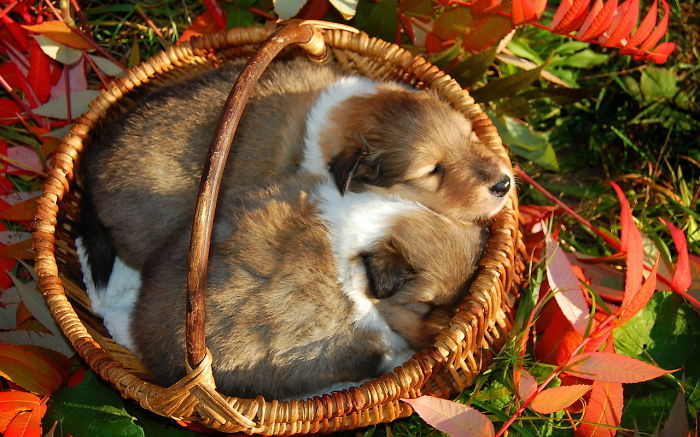 Autumn Puppies