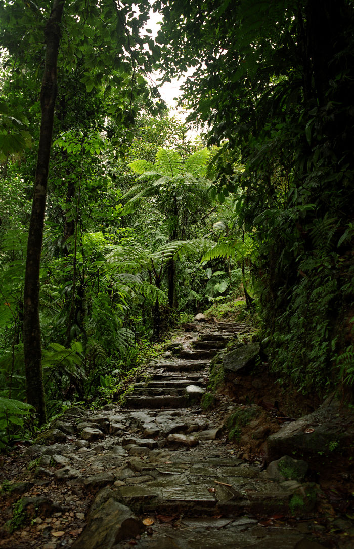 Dominica, Pont Casse Waitukubuli National Trail