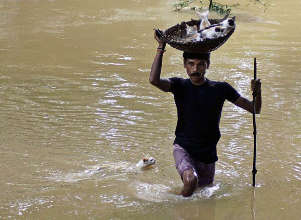 A Man Carries Kittens On A Basket Towards Dry Land