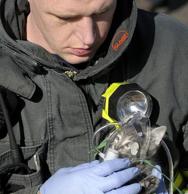 Firefighter Administers Oxygen To Cat Rescued From House Fire