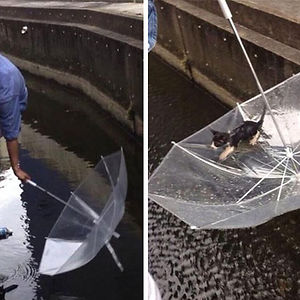 Man Saves A Drowning Kitten With An Ubrella