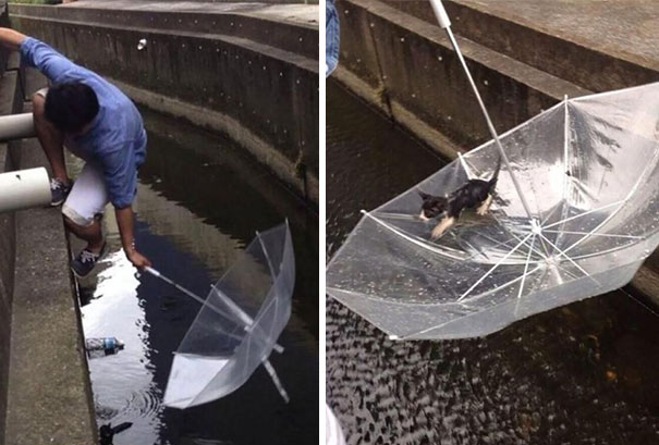 Man Saves A Drowning Kitten With An Ubrella