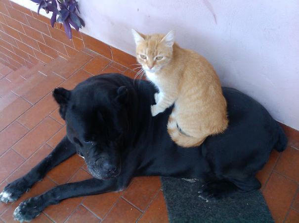 Aron (cane Corco) & Zucka