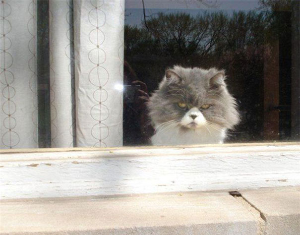 Cat That Is Secretly Plotting To Kill You