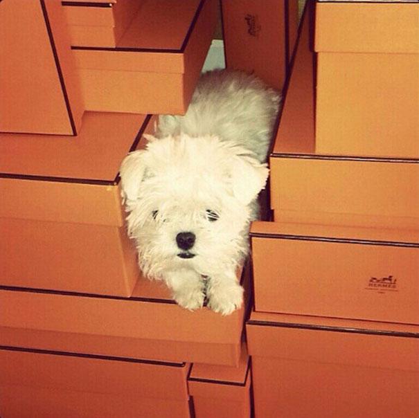 funny-rich-dogs-instagram-kaylin-pound-26