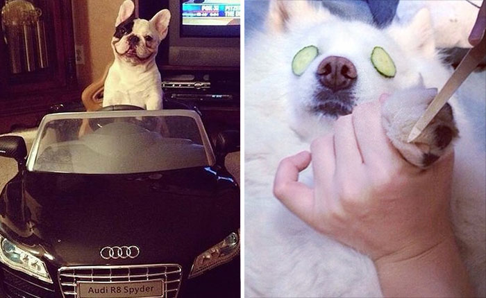 Rich Dogs Of Instagram: The Proof That Pups Live Better Than Humans