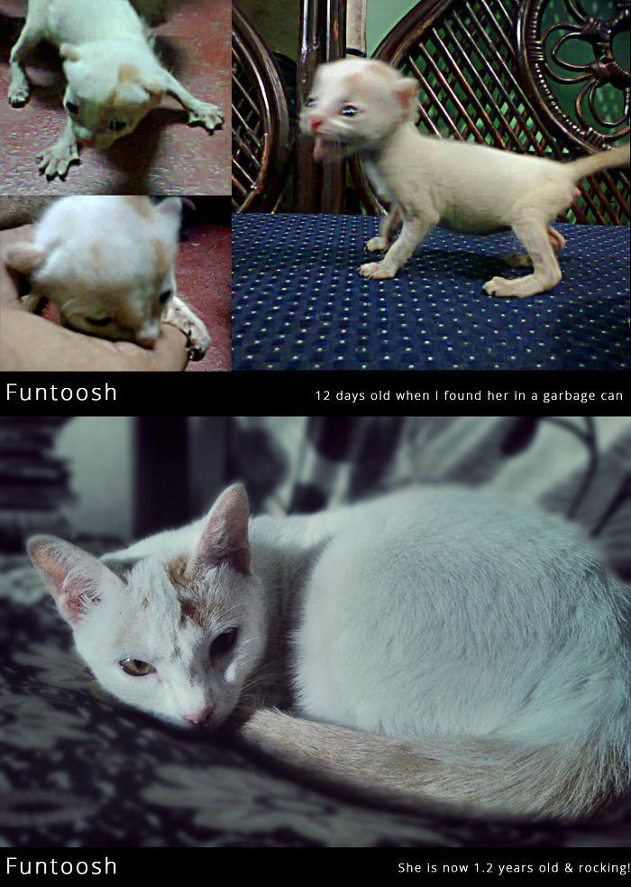 Funtoosh – My Love, My Whole World