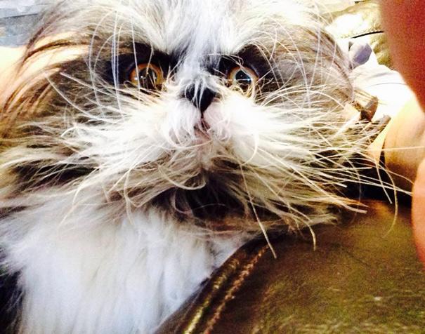 hairy-cat-death-stare-atchoum-13