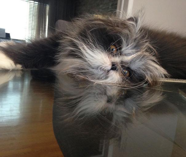 hairy-cat-death-stare-atchoum-22