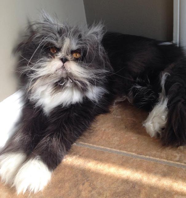 hairy-cat-death-stare-atchoum-24