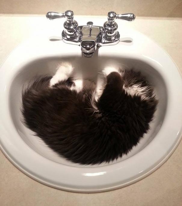hairy-cat-death-stare-atchoum-27