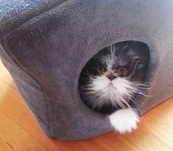 hairy-cat-death-stare-atchoum-29