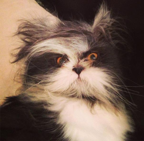 hairy-cat-death-stare-atchoum-31