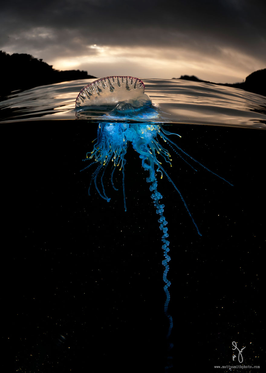 Image result for deep ocean photography