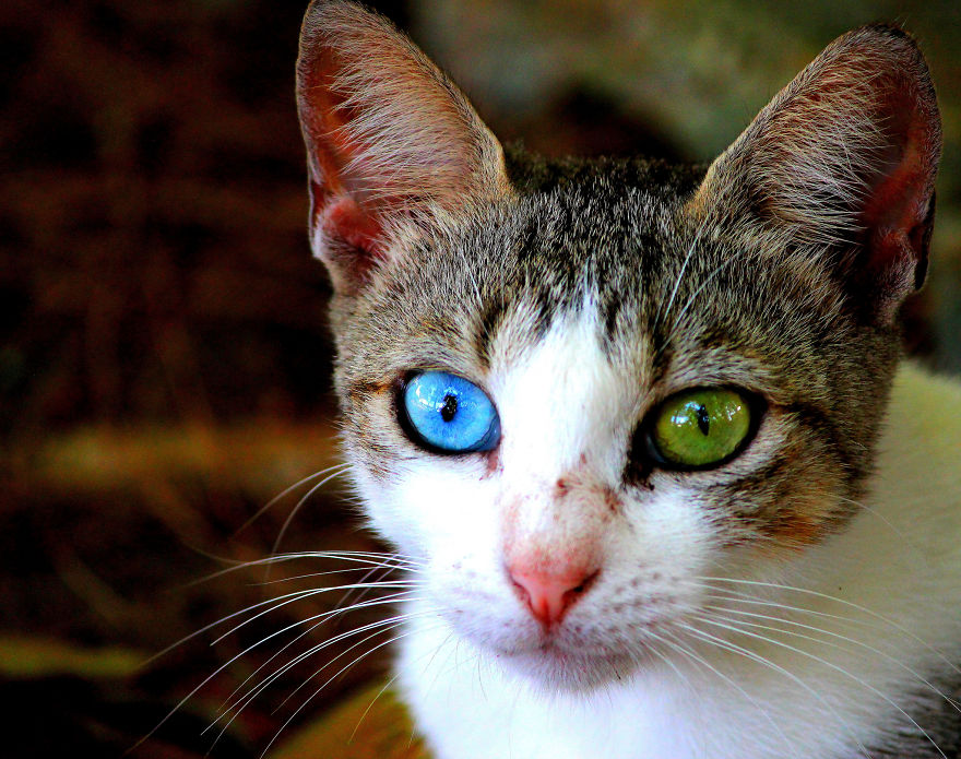What Colors Do Cats Like The Most
