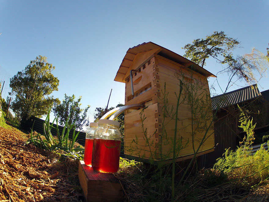 honey-on-tap-flow-hive-stuart-cedar-anderson-9