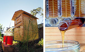 New Beehive Lets You Harvest Honey Automatically Without Disturbing Bees