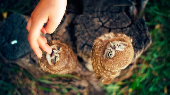 Funny Owl Couple