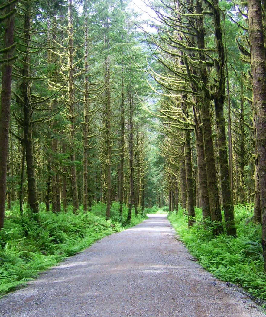Lower Demonstration Forest, British Columbia