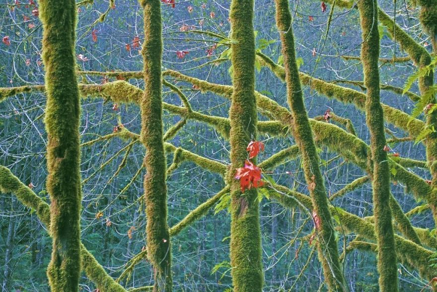 The Mossy Lynn Creek Forest, British Columbia