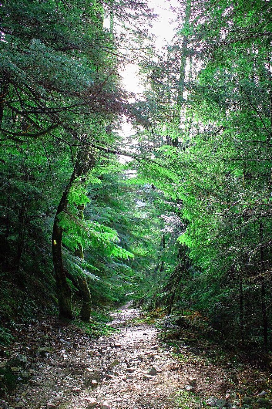 Norvan Falls Cedar Forest Trail British Columbia