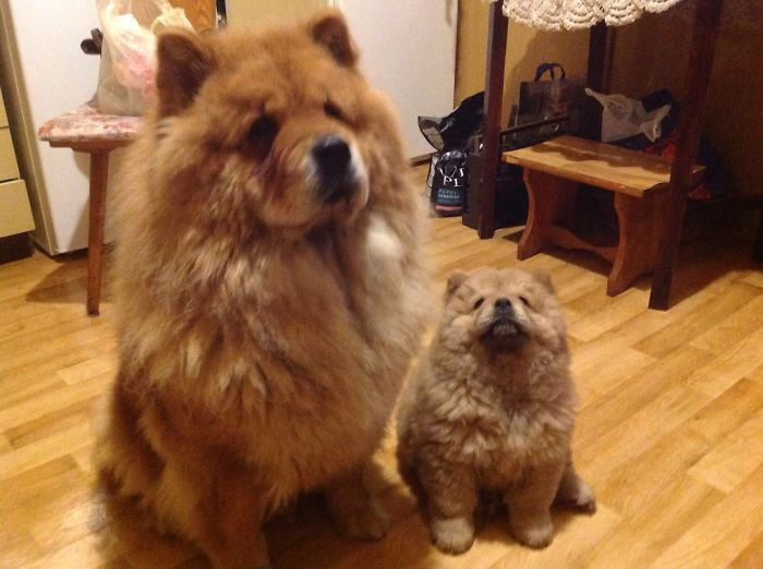Two Buddies