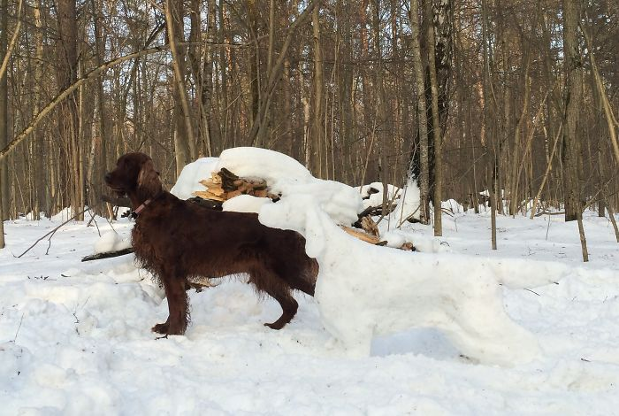 My Irish Setter Girl And Her Snow Friend
