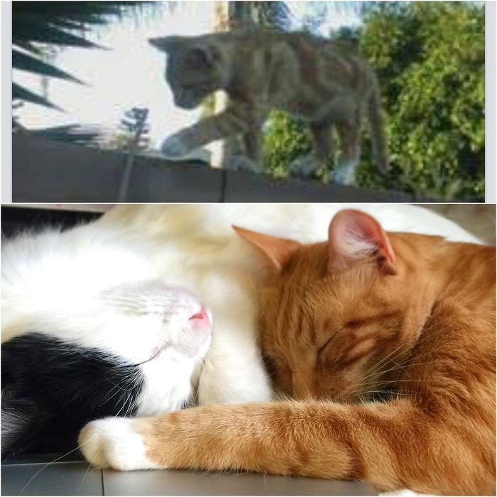 Karl, Former Street Cat, Now Pampered Prince