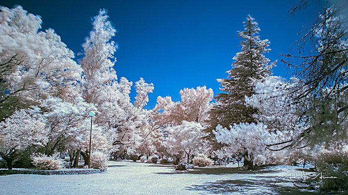 Do You Like Infrared Photography?