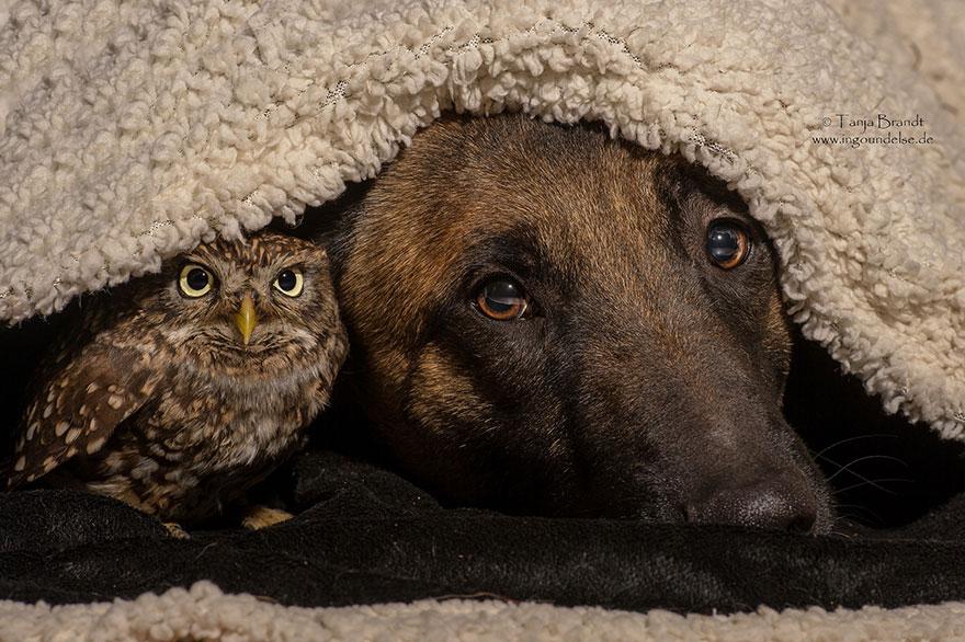 http://static.boredpanda.com/blog/wp-content/uploads/2015/02/ingo-else-dog-owl-friendship-tanja-brandt-10.jpg