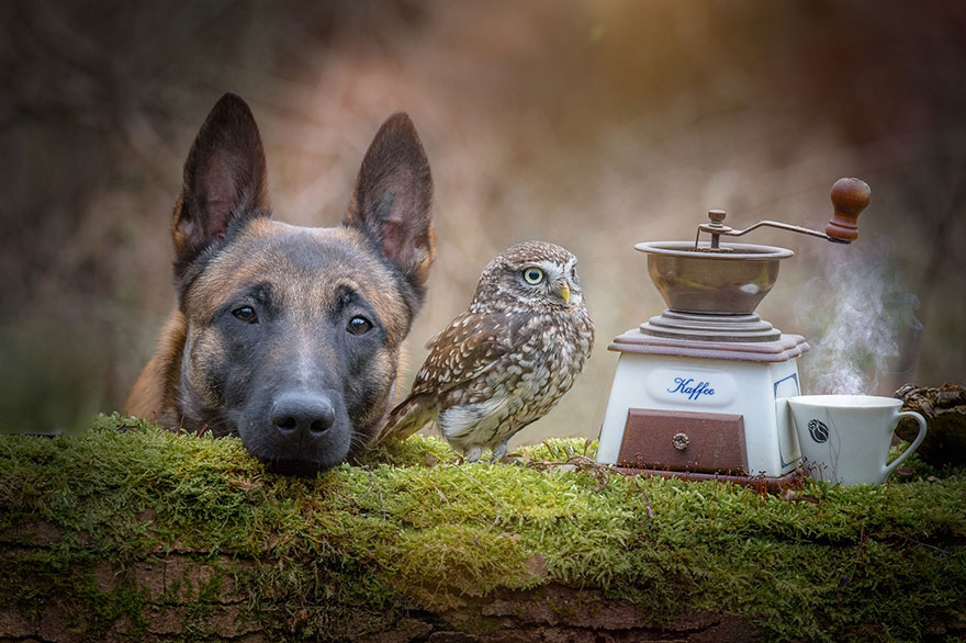 http://static.boredpanda.com/blog/wp-content/uploads/2015/02/ingo-else-dog-owl-friendship-tanja-brandt-13.jpg
