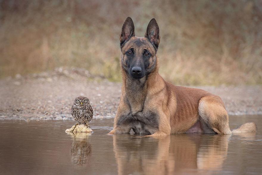 http://static.boredpanda.com/blog/wp-content/uploads/2015/02/ingo-else-dog-owl-friendship-tanja-brandt-14.jpg