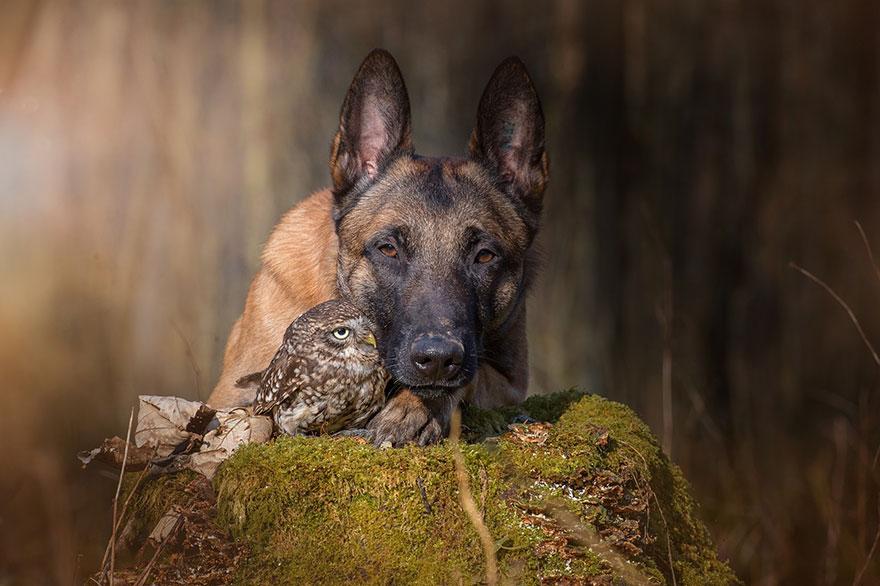 http://static.boredpanda.com/blog/wp-content/uploads/2015/02/ingo-else-dog-owl-friendship-tanja-brandt-2.jpg