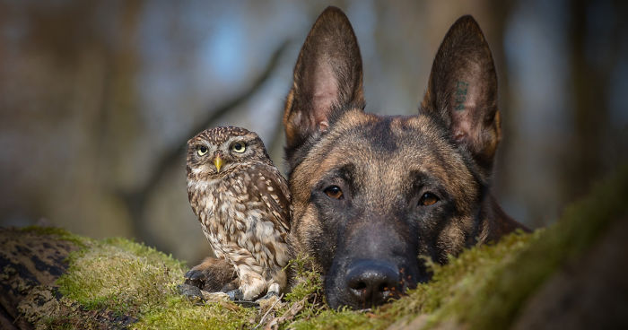 The Unlikely Friendship Of A Dog And An Owl | Bored Panda