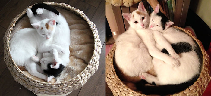 Rescue Cats – Siblings Lily And Lestat / Then And Now