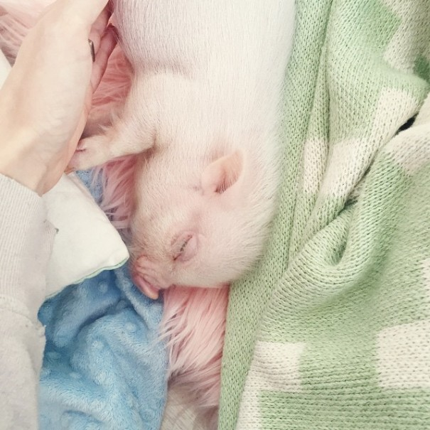 little-girl-piglet-friendship-libby-and-pearl-6