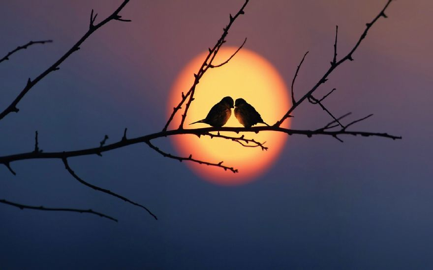 Love Birds couple Wallpaper : Share Your Best Photos Of Loving Bird couples Bored Panda