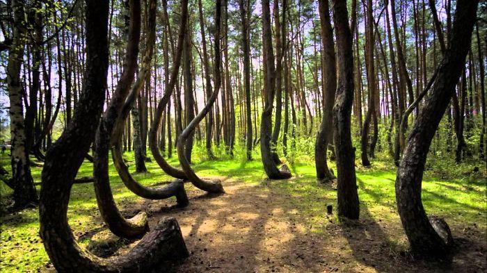 Croocked Forest, Nowy Czarnów, Poland