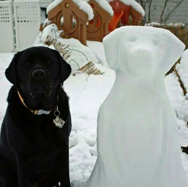 Black Lab And His Lookalike