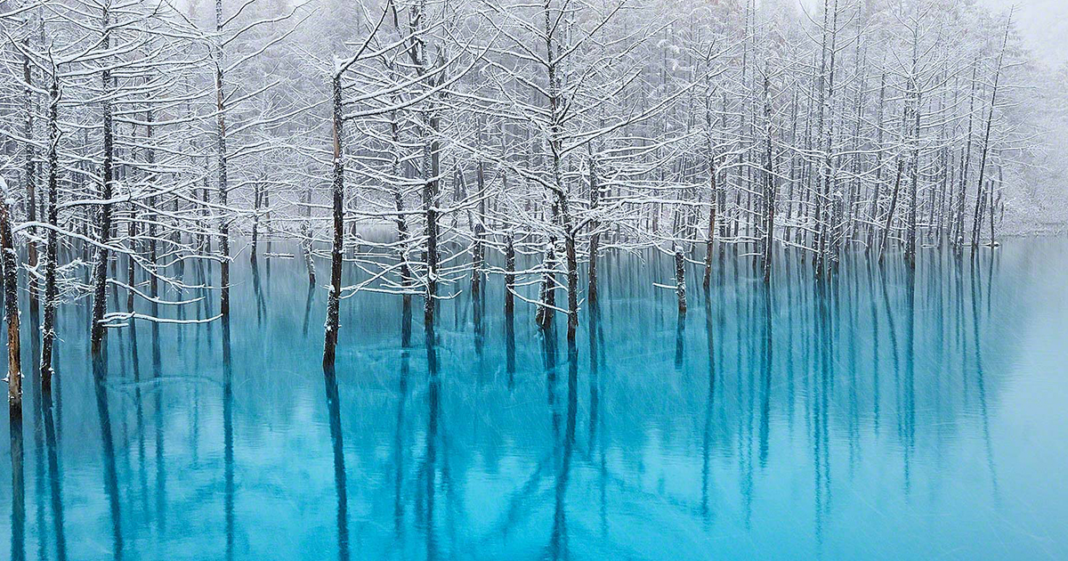 I Live In Hokkaido And Photograph This Magnificent Pond