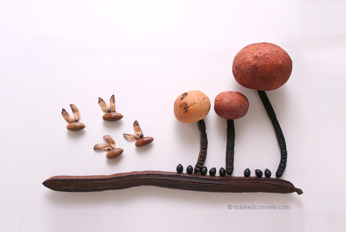seeds-seedpod-photography-mark-connelly-18