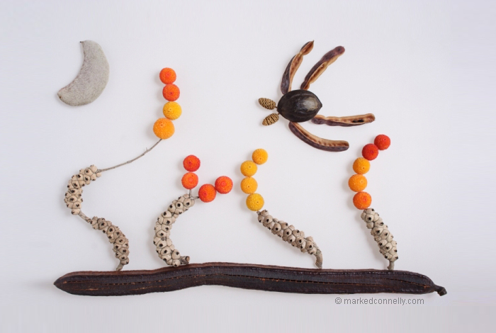 seeds-seedpod-photography-mark-connelly-19