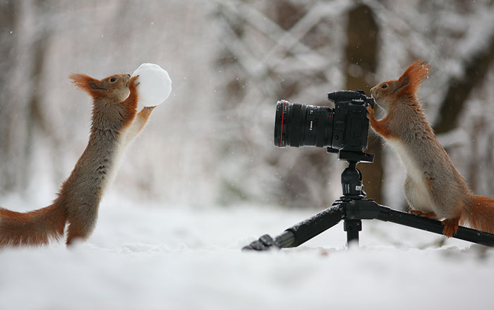Russian Photographer Captures The Cutest Squirrel Photo Session Ever