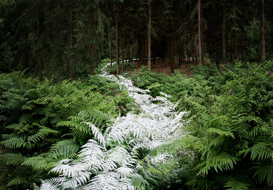 surreal-forest-photograhy-ellie-davis-23