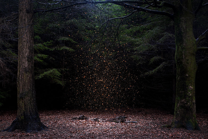 Artist Has Spent 7 Years Turning UK Forests Into Works Of Art