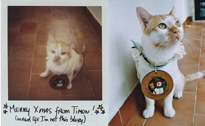 Timon With A Christmas Ornament One Year Later