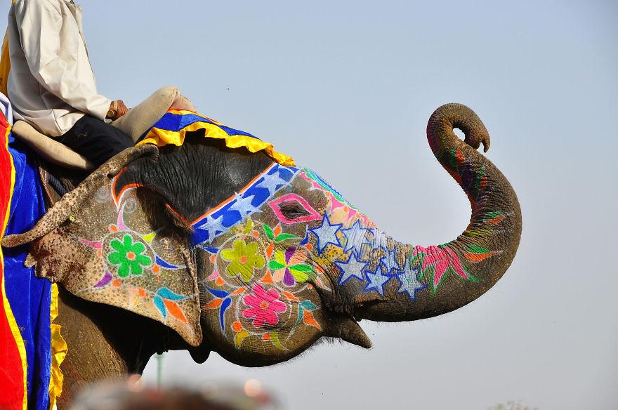 Festival del elefante en Jaipur (India)