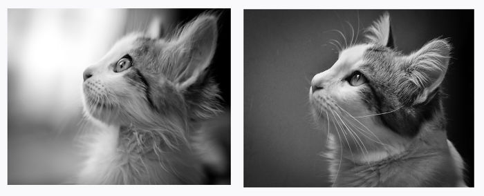 My Cat: Mr. Van Der Waals. The Day That He Comes To Me (left) And 1 Year After That (right)