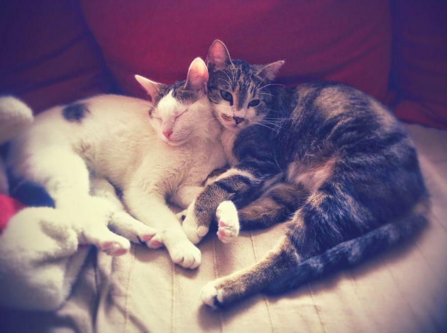 Winnie & Shumi Cuddling On February 15, 2015, Bucharest