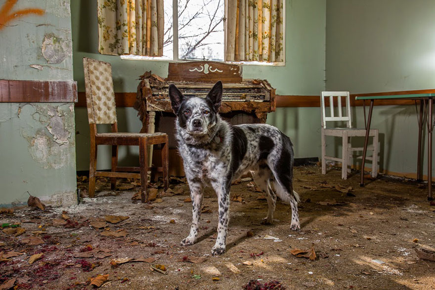 working-dog-photography-shepherds-realm-andrew-fladeboe-21